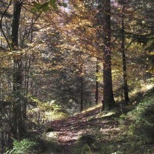Sentiero che da Calalzo va a Rizzios